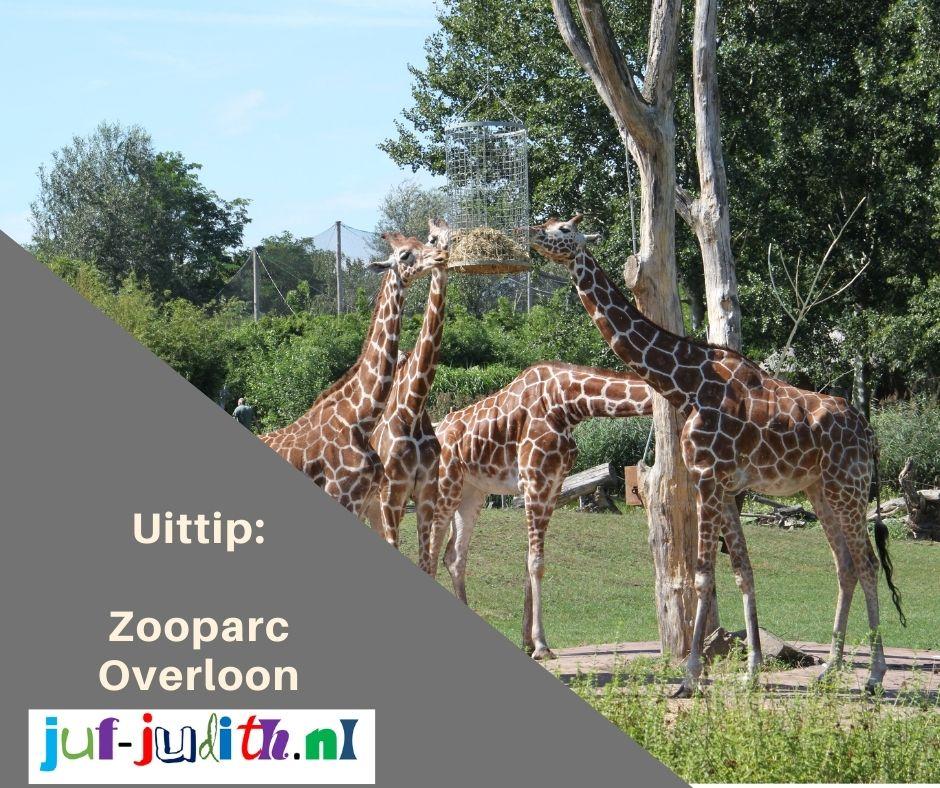 Uittip: Zooparc Overloon
